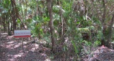 Se clausura predio en área natural protegida de Tulúm