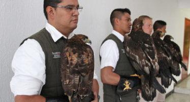 México cuenta con el Centro Nacional del Águila Real (Aquila chrysaetos) para la conservación de esta emblemática especie