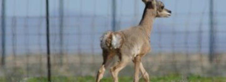 En México hay ejemplos de éxito en la reintroducción de especies de fauna a su hábitat natural