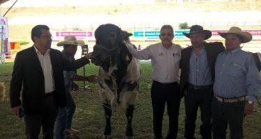 Distribuye Sedrua más de 2 mil cabezas de ganado en Michoacán
