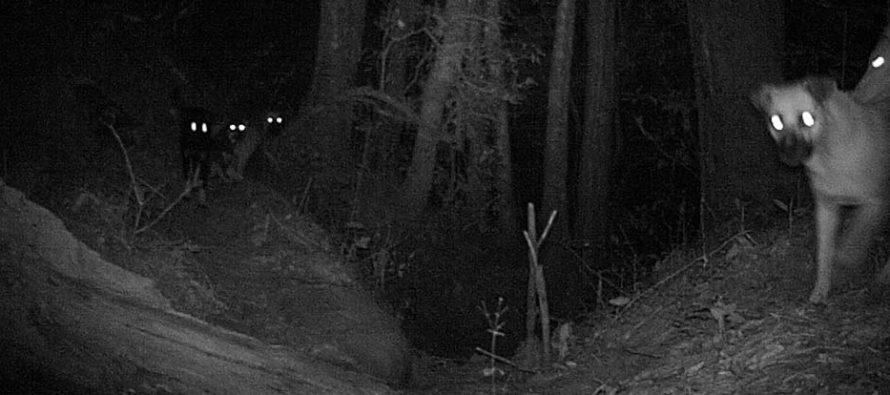 Perros ferales, un peligro para los ecosistemas