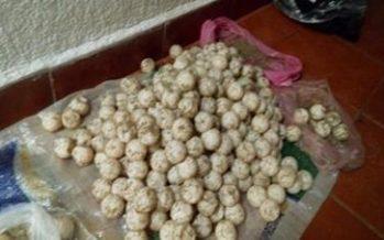 Recuperan y destruyen 315 huevos de tortuga golfina (Lepidochelys olivácea) en playas de Guerrero