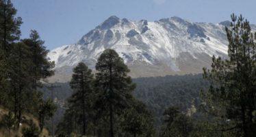 Clausuran predio Área de Protección de Flora y Fauna Nevado de Toluca por destrucción de cubierta vegetal
