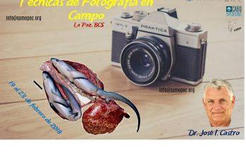 La Sociedad Mexicana de Peces Cartilaginosos invita al curso Técnicas de Fotografía en Campo