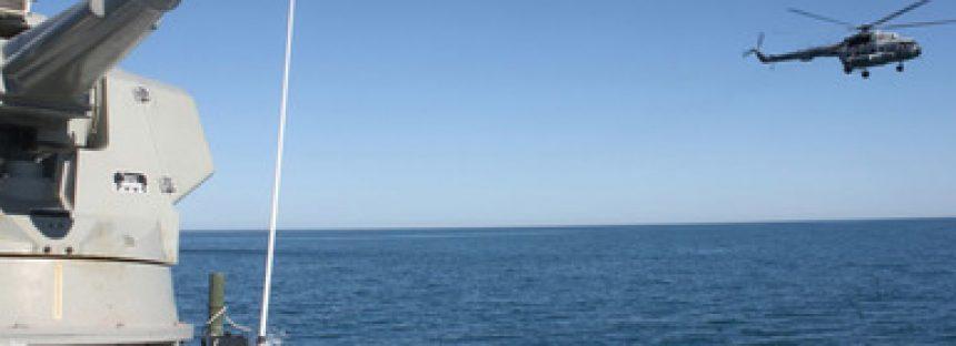 Melanie Rohr: Historia de colaboración para salvar a la vaquita marina (Phocoena sinus)