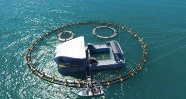 """Listo el """"nido"""", un dispositivo para recibir y proteger ejemplares de vaquita marina (Phocoena sinus)"""