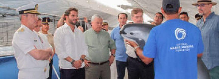 Cuatro delfines nariz de botella (Tursiops truncatus) de la Armada de EUA llegan para arrear a los últimos ejemplares de vaquita a su santuario