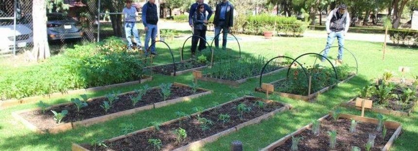 Proyecto de huertos orgánicos de traspatio en el Parque 150 de Morelia