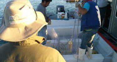 Por pescar ilegalmente, incautan dos embarcaciones y 1.7 km de redes camaroneras