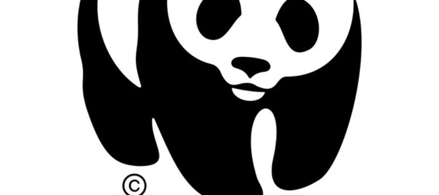 WWF, un socio ambiental del gobierno de México,  celebró el decreto del nuevo Parque Nacional Archipiélago de Revillagigedo