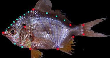 Seminario Inecol: Morfometría geométrica para la filogenia de especies de  Gerreidae o mojarra
