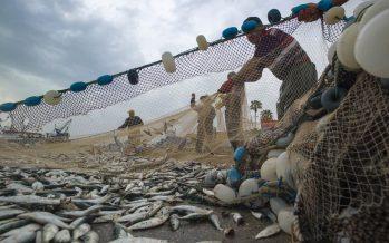 México transita de una economía sólida a lograr mejores ingresos al productor, en sector pesquero: Sagarpa