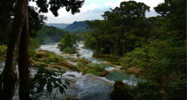 Construyen muro para restablecer el caudal en las cascadas de Agua Azul