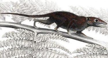 Los seres que salieron a la luz tras la extinción de los dinosaurios