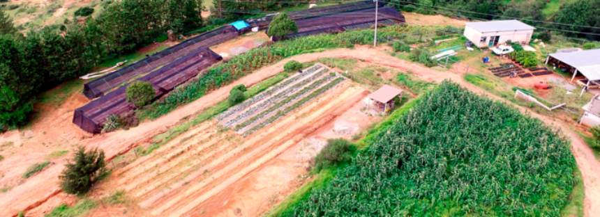 Pronatura y los 10 años del Programa Nacional de Reforestación y Cosecha de Agua