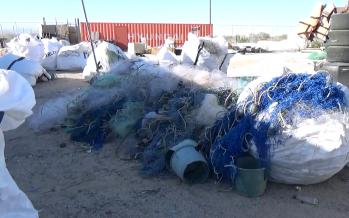Vaquita marina: Retiran 50 toneladas de redes agalleras el último año en el Alto Golfo de California