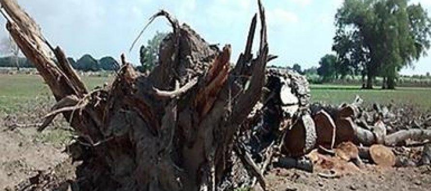 Suspenden aprovechamiento forestal de un ecosistema ripario en el río San Juan de Culiacán, Sinaloa