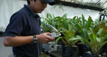 Las plantas y el cambio climático