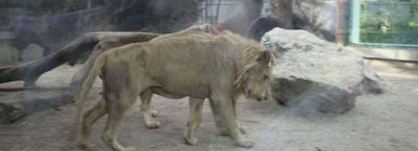 Por desatención, aseguran todos los animales del zoo de Ciudad del Carmen: 352 aves, mamíferos y reptiles