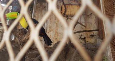 Aseguran ejemplares silvestres exóticos en el Rancho La Esperanza de Tonalá, Jalisco
