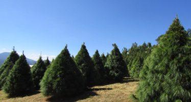 Invierten en Michoacán 208 mdp para impulsar el desarrollo forestal sustentable
