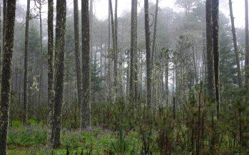 Urgente en México una política forestal adecuada para ecosistemas de bosque templado