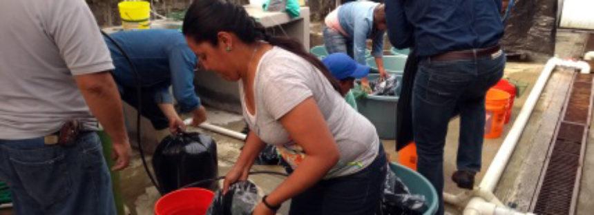 Liberan 3 mil juveniles de acúmara (Algansea lacustris) en el lago de Pátzcuaro para fortalecer su deteriorada población