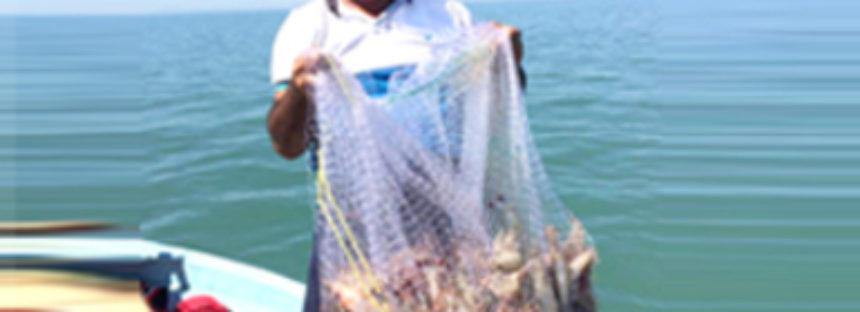 Pretende INAPESCA sustituir redes de enmalle en el Alto Golfo de California con redes que ya se usan en Sinaloa