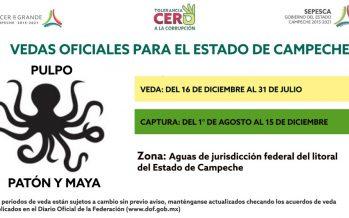 Veda oficial para el estado de Campeche: Pulpo patón y maya