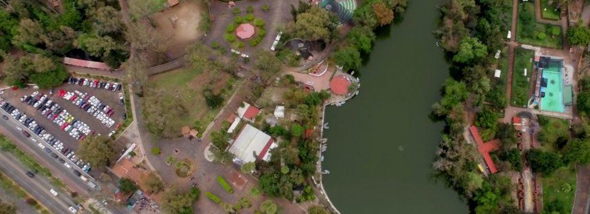 Promueven UMSNH y Zoológico de Morelia, rescate y conservación del ajolote de Pátzcuaro (Ambystoma dumerilii)