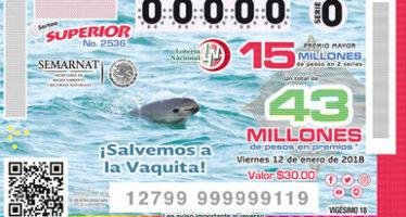 La azarosa vida de la vaquita marina (Phocoena sinus), un mamífero marino mexicano casi extinto: La Lotería Nacional emite un boleto con su imagen