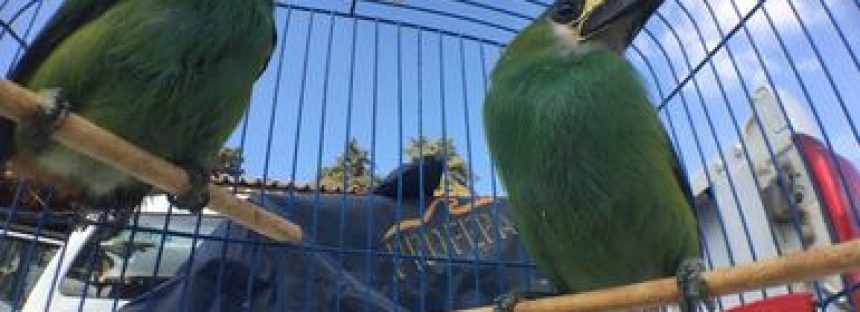 Incautan ejemplares de fauna silvestre en el municipio de Ozumba, Estado de México