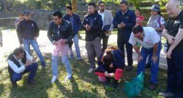 Decomisan y liberan 244 loros cachete amarillo (Amazona autumnalis) en el Parque Nacional Palenque en Chiapas
