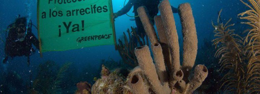 Urge más investigación para conocer la salud de los arrecifes de la Península de Yucatán