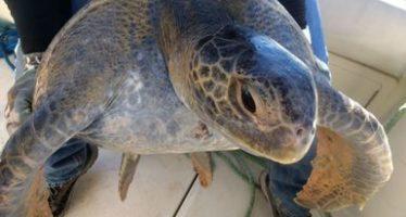 Protegidos más de 4.1 millones de nidos de tortugas marinas en Oaxaca en 2017