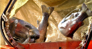 La granja acuícola El Pedregal, equipadas con tecnología de punta es líder nacional en producción de trucha