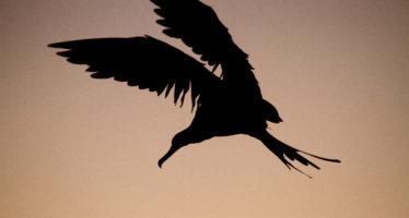 La organización Aves Marinas del Pacífico (PSG) realiza su 45a reunión anual en La Paz, BCS del 21 al 24 de febrero