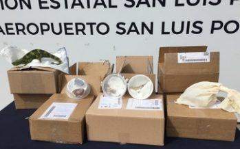 Confisca en Estafeta de SLP, 10 paquetes con 18 ejemplares de reptiles y tarántulas