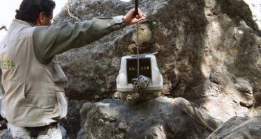 Liberan a 8 ejemplares de vida silvestre en la reserva de la biosfera Sierra de Huautla, Morelos