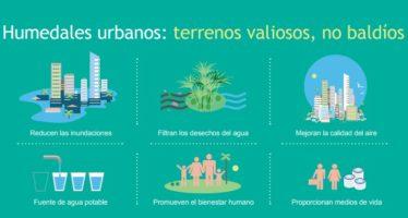 Humedales urbanos: terrenos valiosos, no baldíos