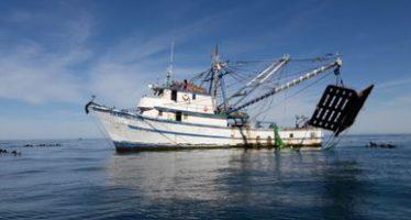 Aseguran camaronero por pesca ilegal en la Reserva de la Biósfera Islas del Pacífico, de la Península de Baja California