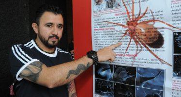 Descubre nueva especie de araña violinista (Loxosceles sp) en Puebla, un científico mexicano de la UNAM