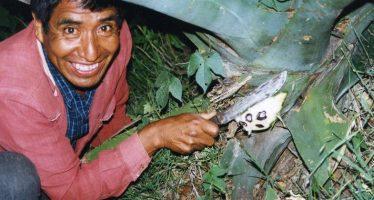 La defaunación es un grave problema en México; urge legislar sobre consumo de insectos