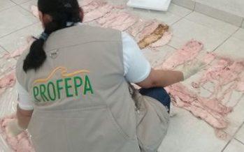 Decomisan 87 buches de totoaba (Totoaba macdonaldi) en Tijuana, listas para pasar a Estados Unidos