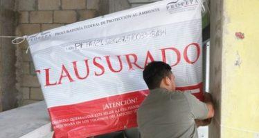 Clausura la Profepa a Señor Frog´s Hotel y Hostel en Cancún, Quintana Roo