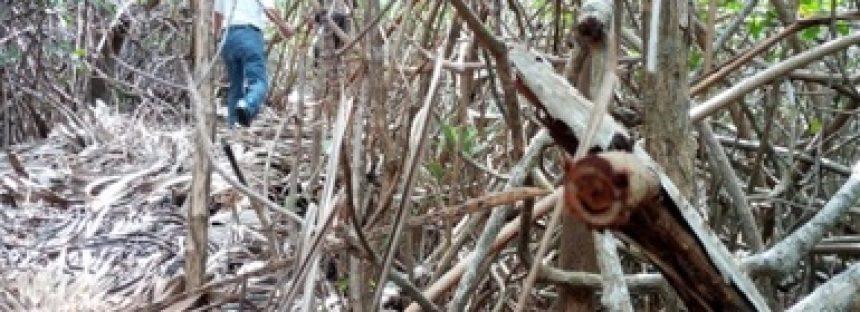 Clausuran predio en Tulum por afectación de ecosistemas de manglar y duna costera