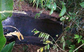Contaminación por derrame de crudo en caño la Lizama