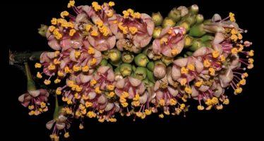 La revista Desde el Herbario CICY, es una publicación científica de gran prestigio en México
