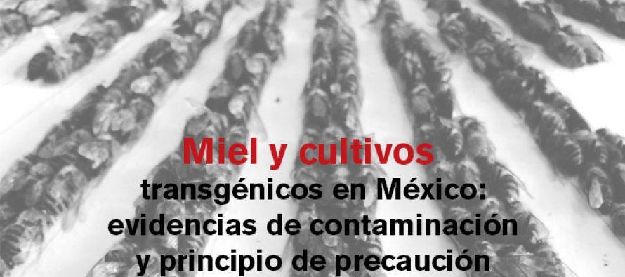 Miel y cultivos transgénicos en México: Evidencias de contaminación y principios de precaución