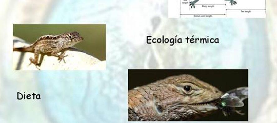 Efectos de las áreas verdes urbanas sobre las poblaciones de reptiles en Morelia, Mich. Convoca a estudiantes interesados a realizar tesis